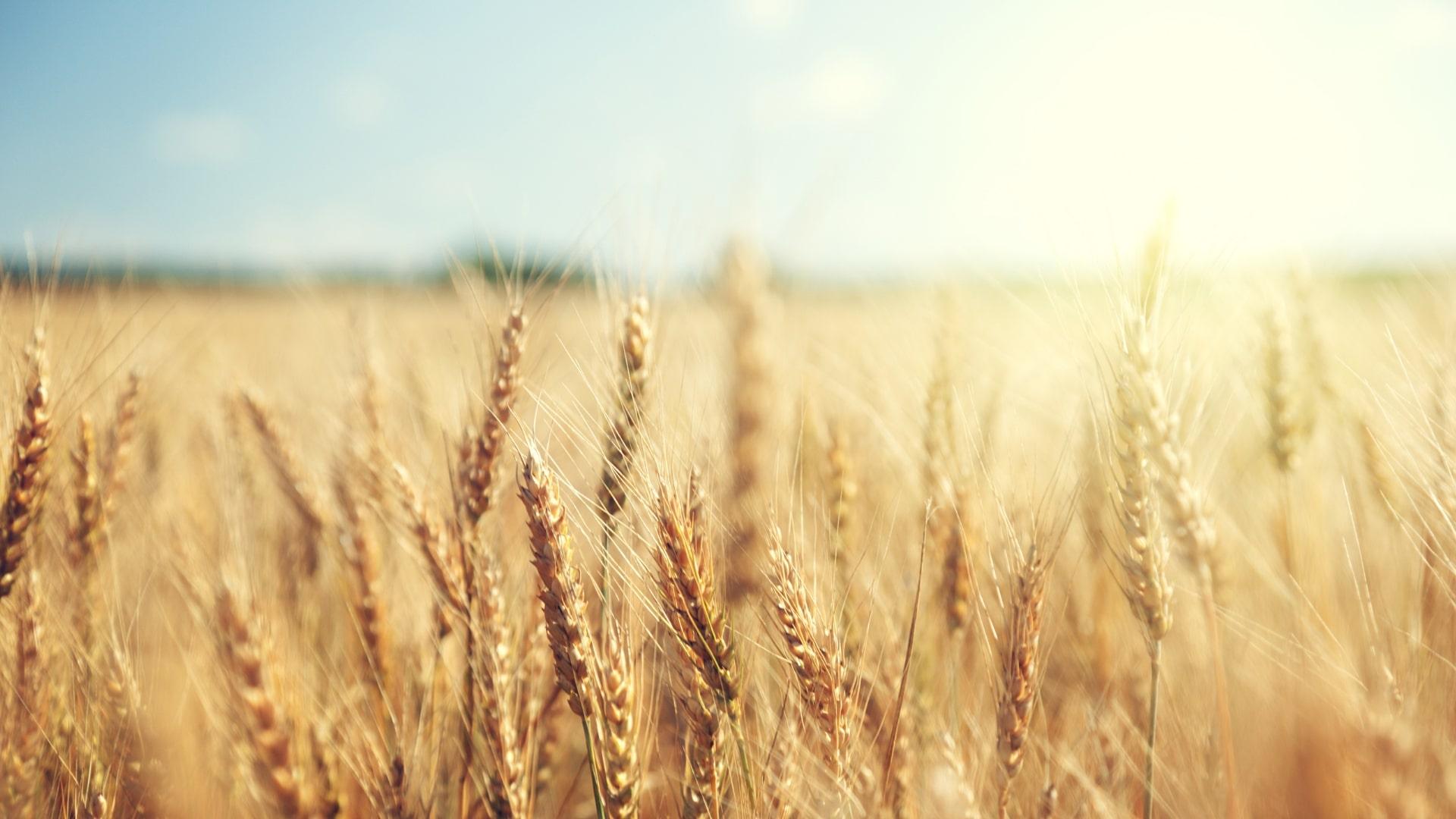 Webconférence sur le marché des grains